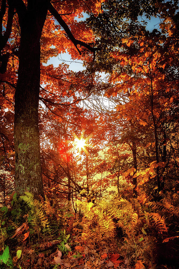 Golden Sunrise with Trees and Ferns by Dan Carmichael