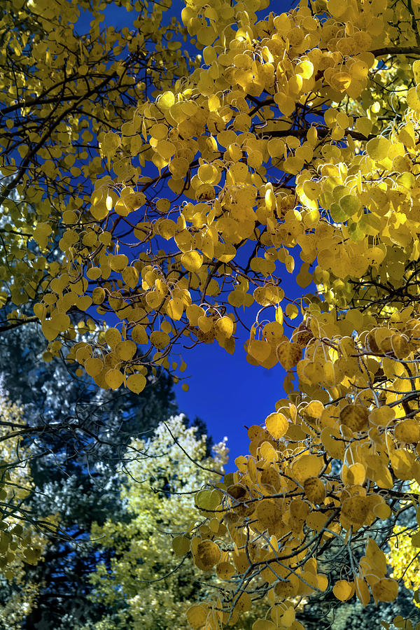 Golden To Blue Photograph by Alana Thrower