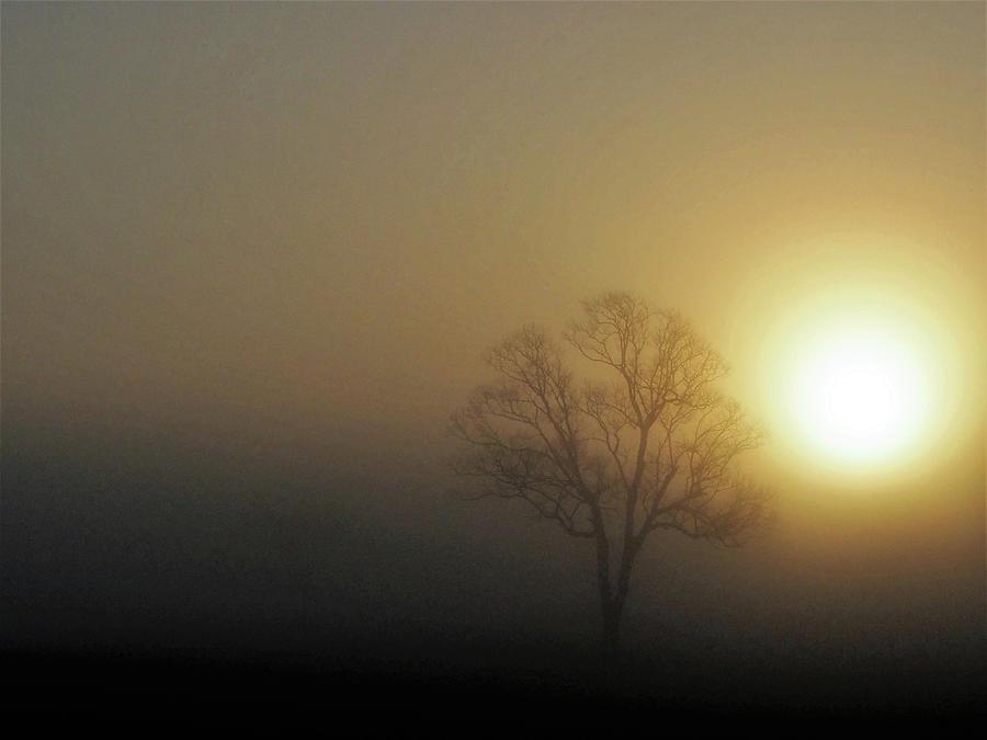 Golden Tree Photograph