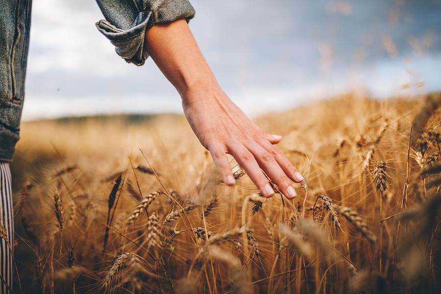 Golden wheat fields Photograph by FluxFactory