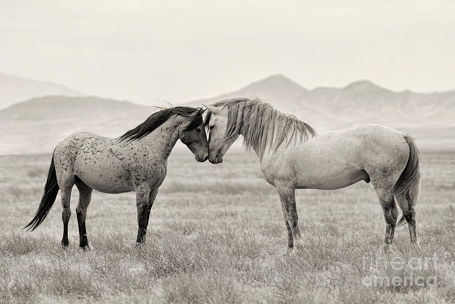 Nikon Photograph - Goliath And Red Lady by Nicole Markmann Nelson