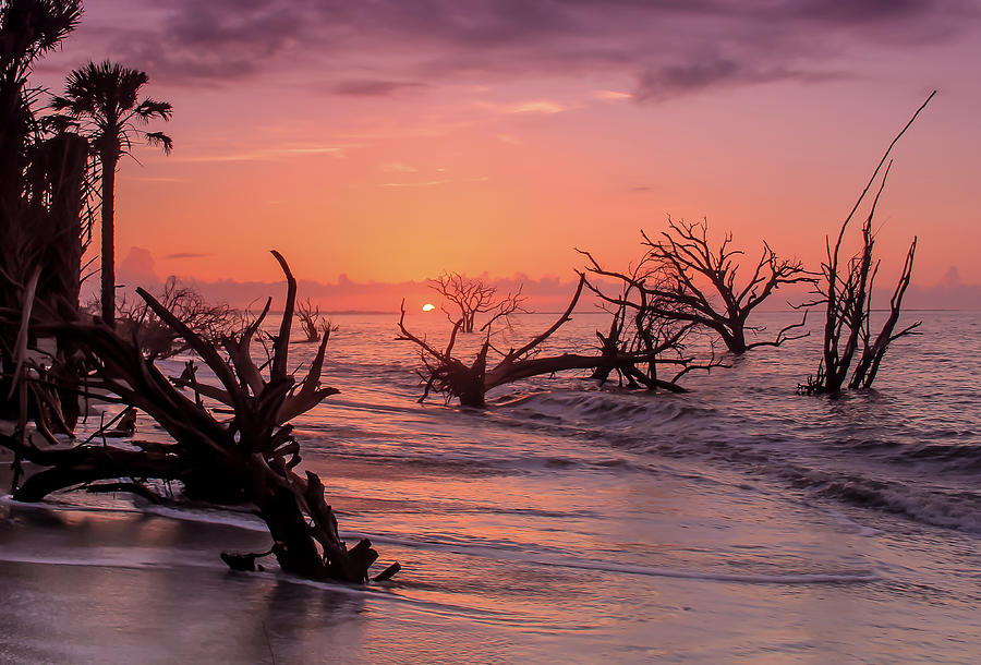 The Forest And The Sea Photograph