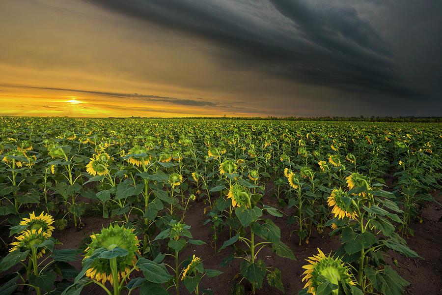 Sunrise Photograph - Good Morning Sunshine by Aaron J Groen