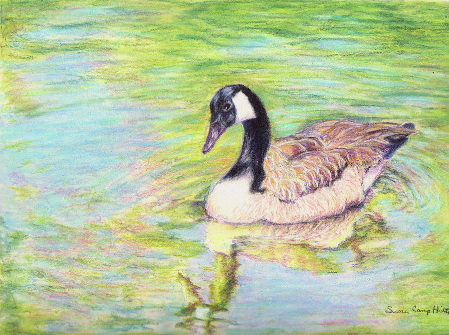 Contemplation Drawing - Goose on pond - Contemplation by Susan Camp Hilton