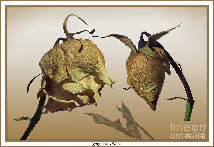 Roses Photograph - gorgeous Oldies by Klaus Jaritz
