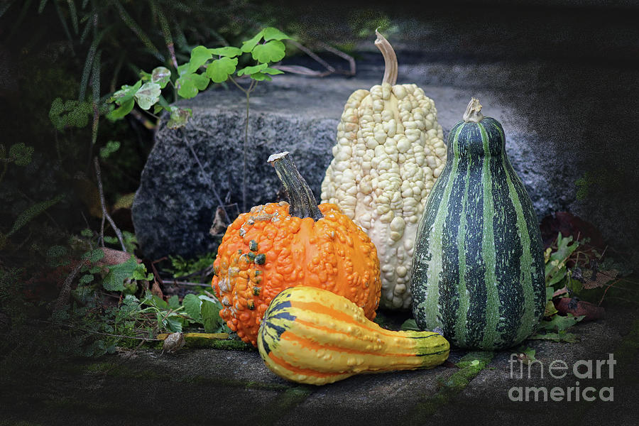Gourds At My Door Photograph