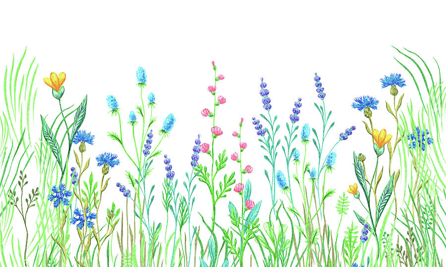 Graceful Beauty Of Wildflowers Field Botanical Watercolor Painting
