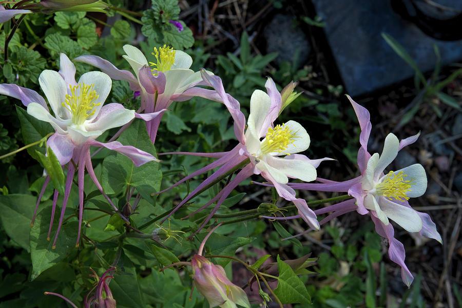 Graceful Blossoms Photograph
