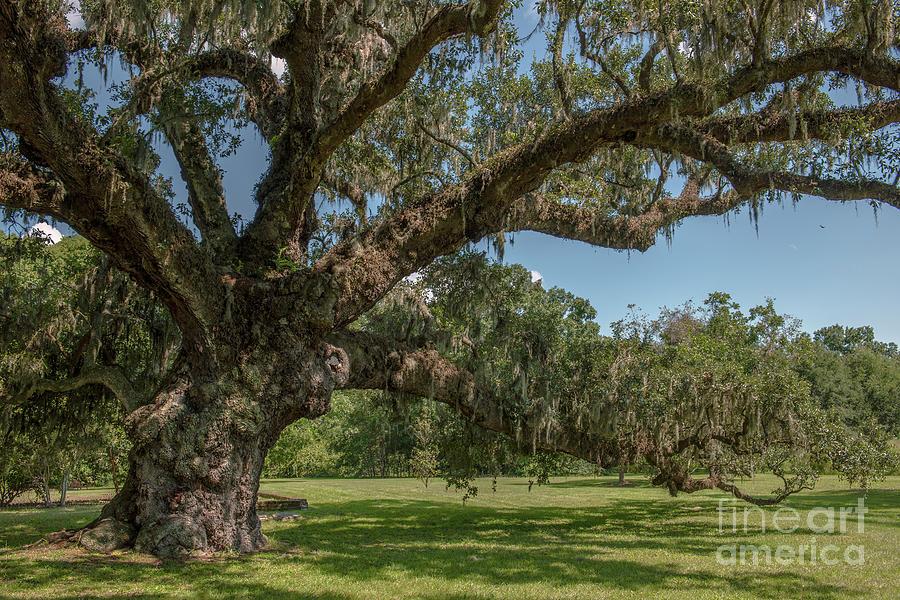 Grand Lady - Mcleod Plantation Photograph
