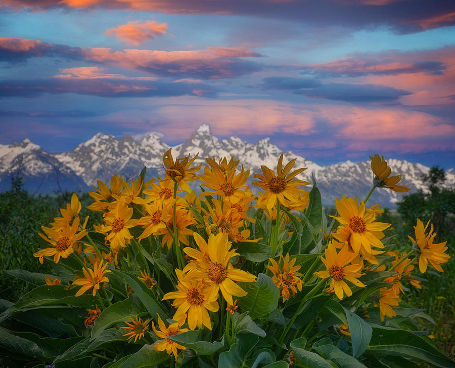 Grand Teton Sunset Flowers Photograph