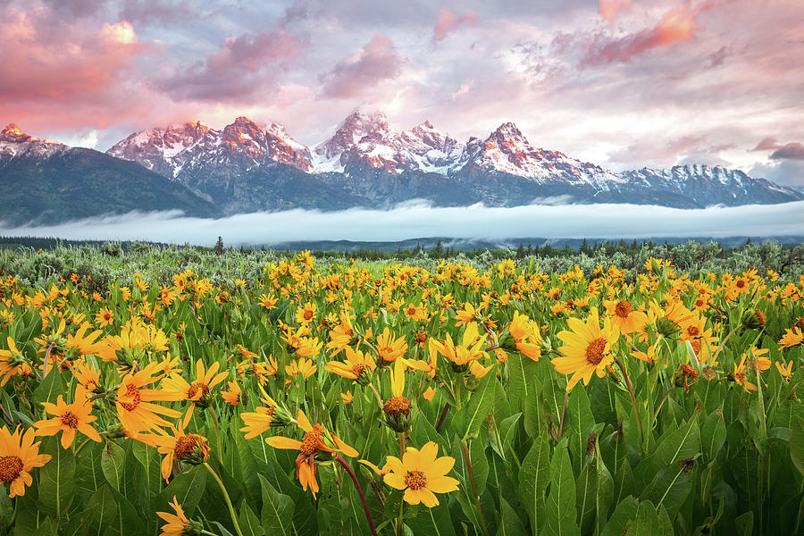 Wyoming Photograph - Grand Teton Wildflower Sunrise by Johnny Adolphson