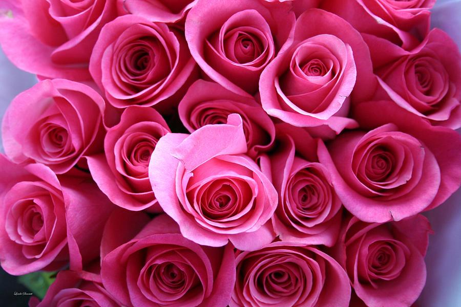 Pink Roses Photograph - Grandma Roses by Linda Sannuti