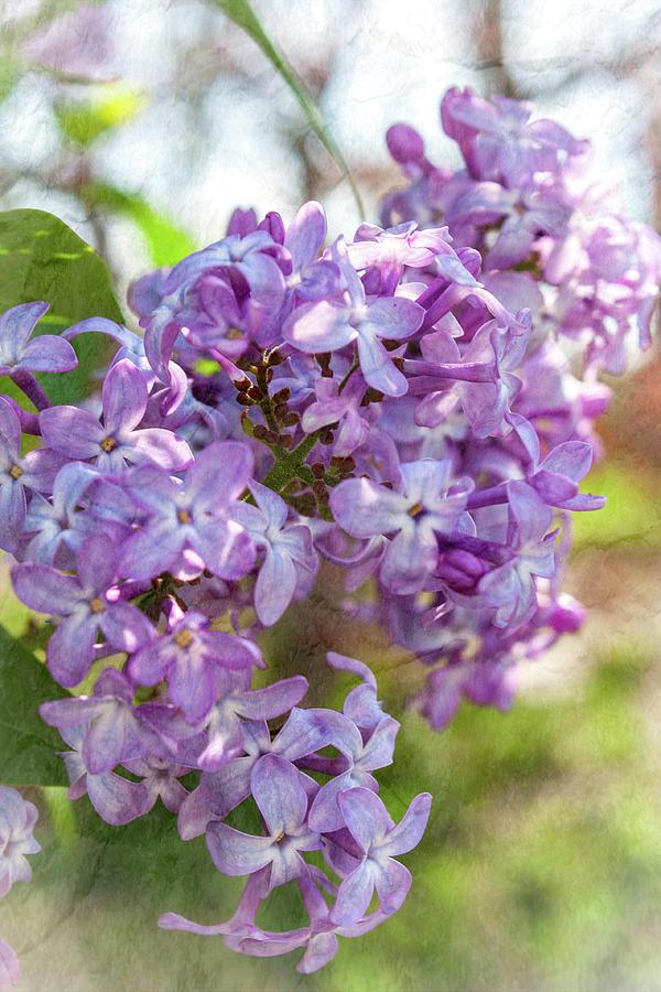 Grandmas Garden Memories Photograph