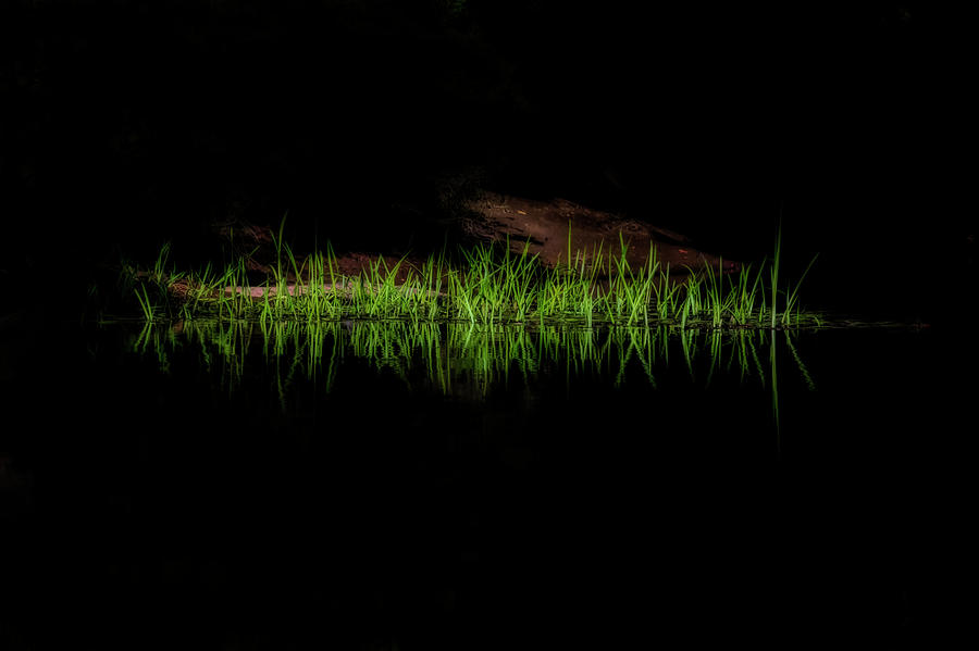 Grass along the rivers edge near the bank by Dan Friend