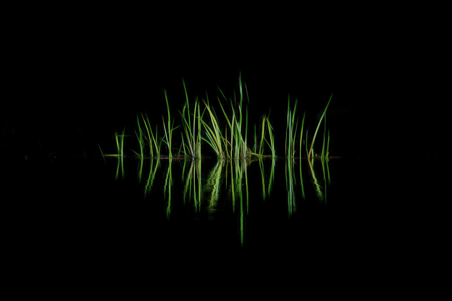 Grass along the rivers edge simple design by Dan Friend