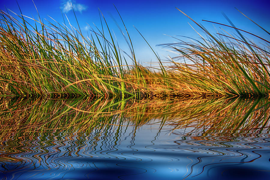 Grass, Water And Sky Photograph