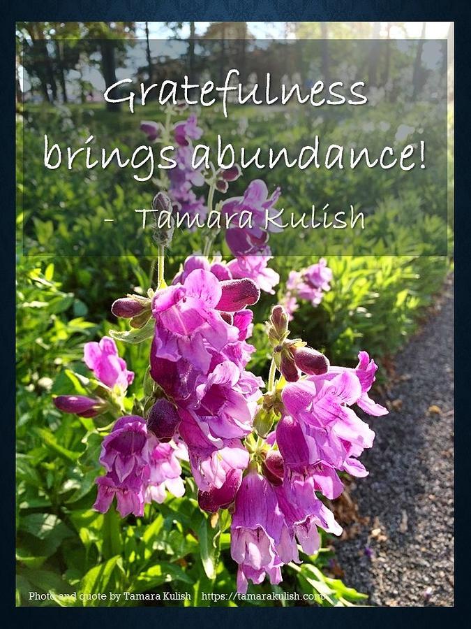 Gratefulness Photograph - Gratefulness brings Abundance by Tamara Kulish