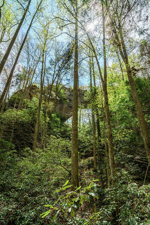 Grays Arch In Red River Gorge Photograph