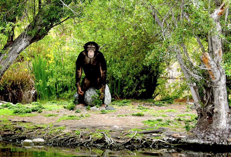 Great Ape Of Monkey Island Santa Maria California Photograph