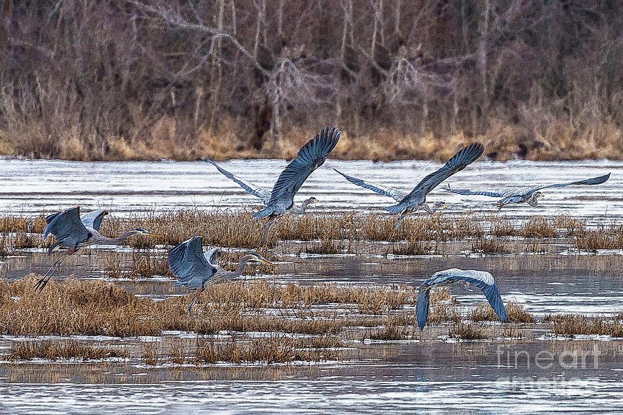 Heron Mixed Media - Great Blue Heron Collage by Jennifer White