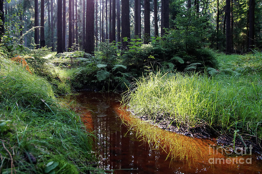 Green Grass And Red-brown Water 1 Photograph
