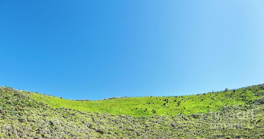 Green Hillside Photograph