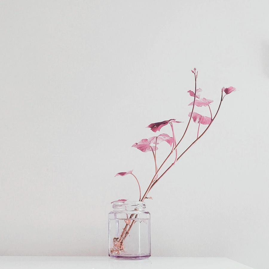 green leafed plant on glass vase - Surreal Art by Ahmet Asar Digital Art