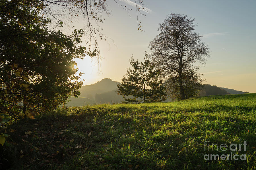 Green Meadow And Golden Light 2 Photograph