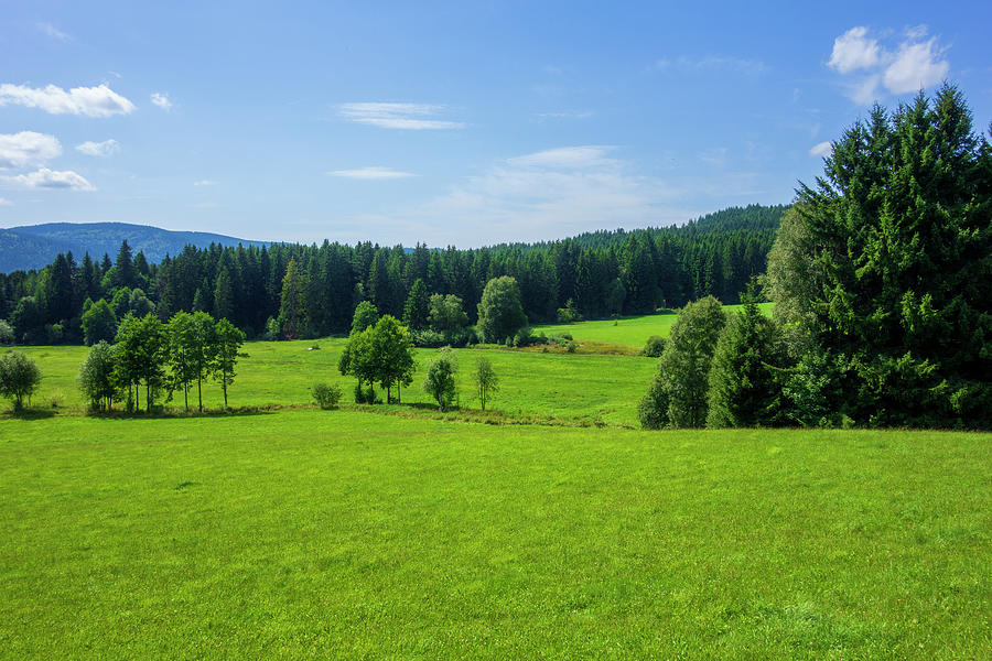 Green Mountains Next To Schluchsee Lake Photograph