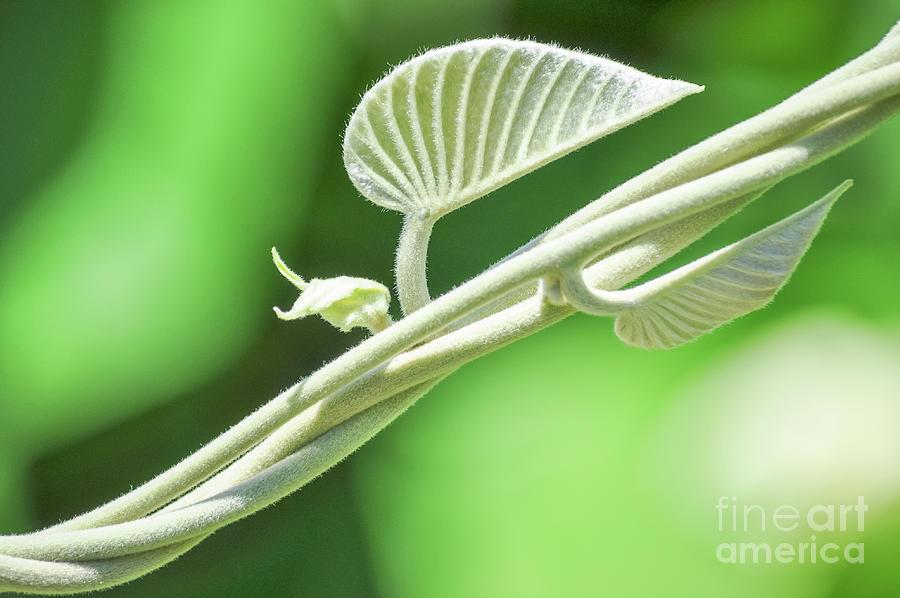 Green Nature Ornament 3 Photograph
