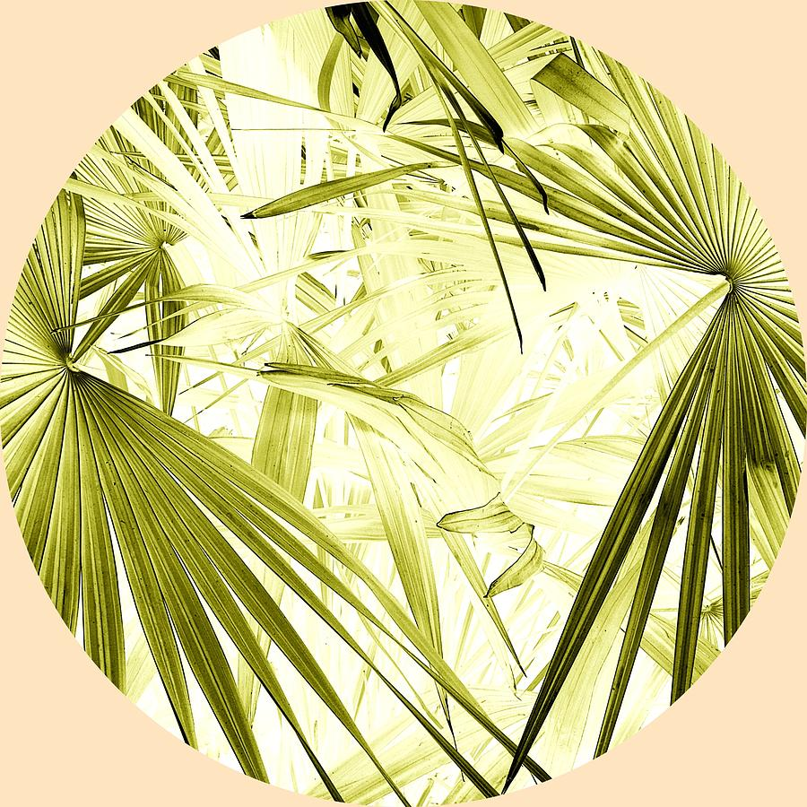 Palm Leaves Photograph - Green Palm Jungle by Tom Kelly