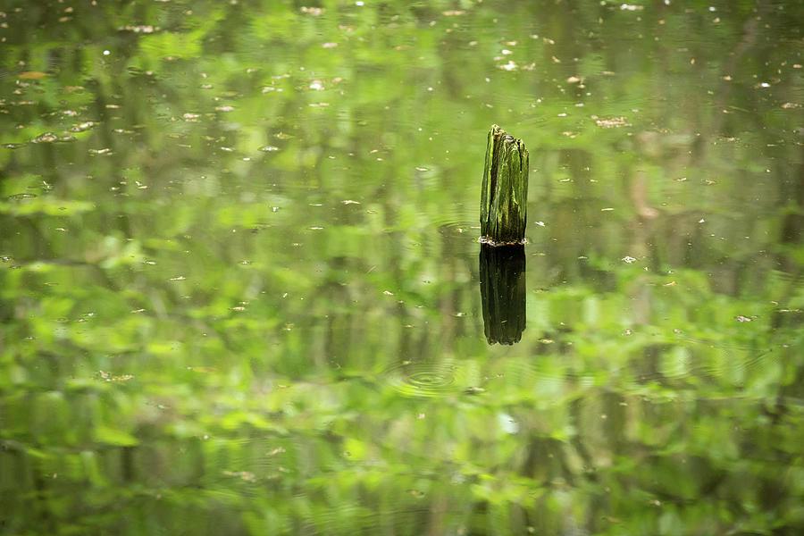 Green Pond Photograph