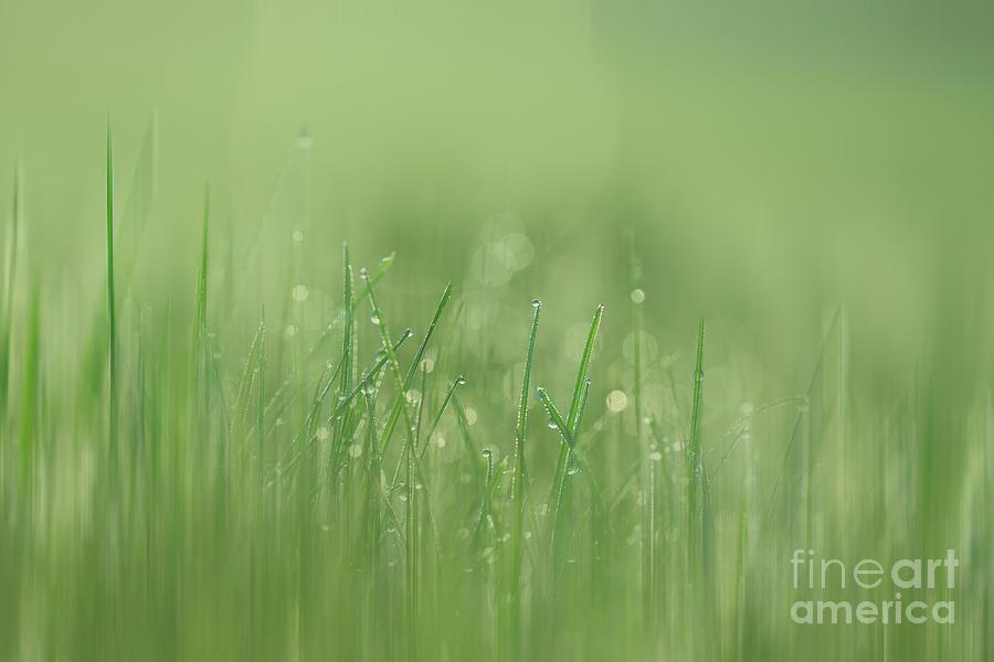 Green Streak Photograph