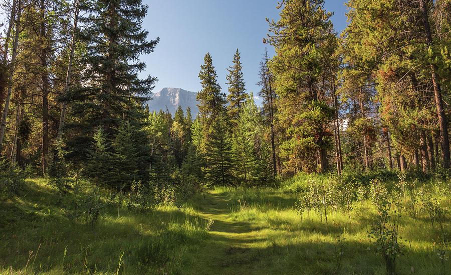 Green Trail by Kristopher Schoenleber