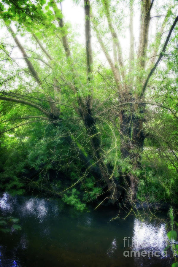Green Tree In Park by Doc Braham