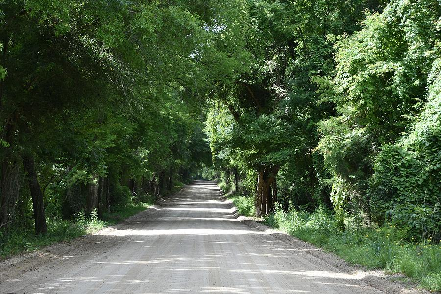 Green Trees Of Centerville Avenue Photograph