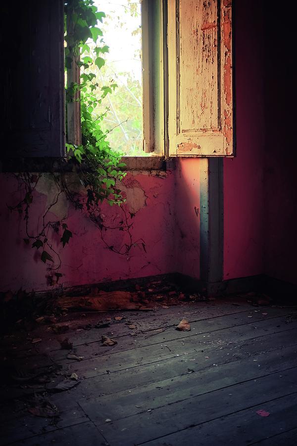Green Window by Carlos Caetano