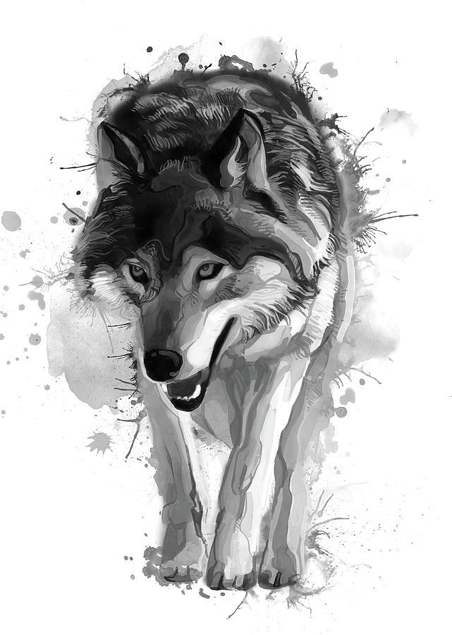 Grey Wolf Bw Digital Art