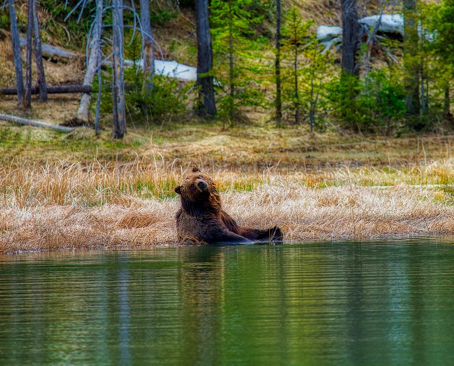 Grizzly Bear Photograph - Grizzly Bear Enjoying The Water by N P S Neal Herbert