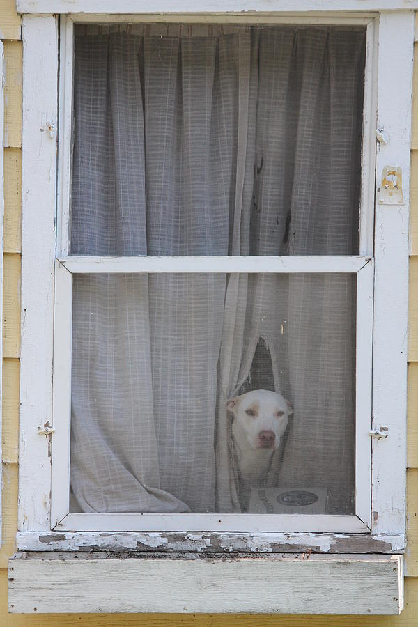 Dog Photograph - Guard Dog by Callen Harty