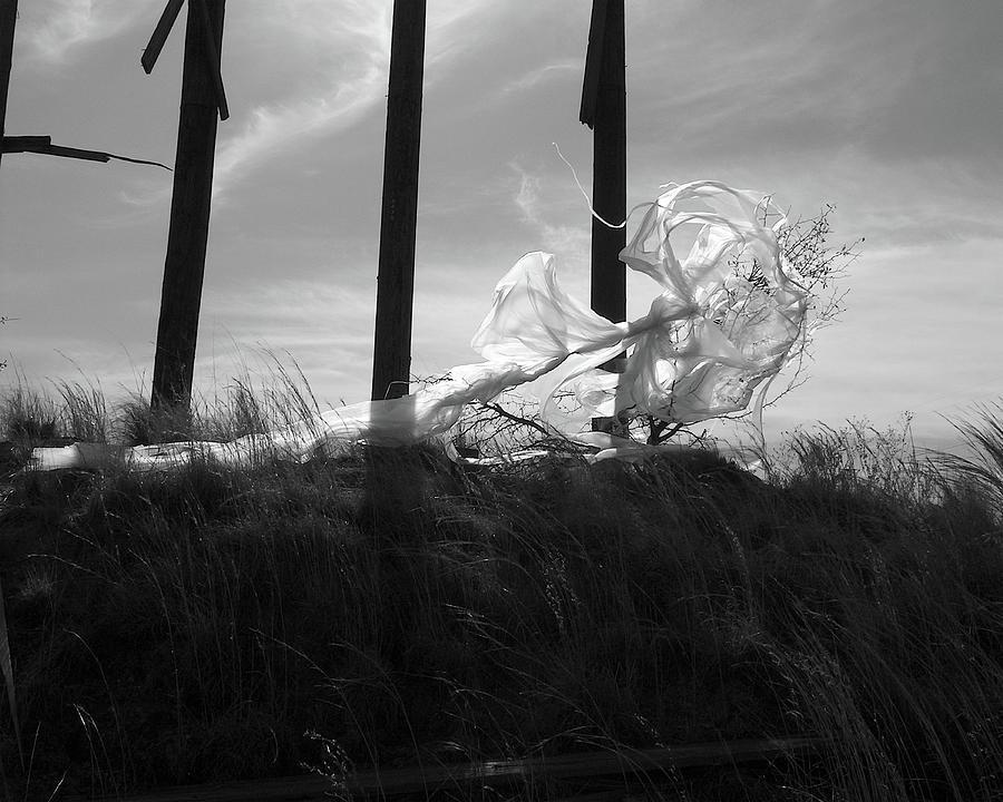 Guardian Angel Photograph by Ken OToole