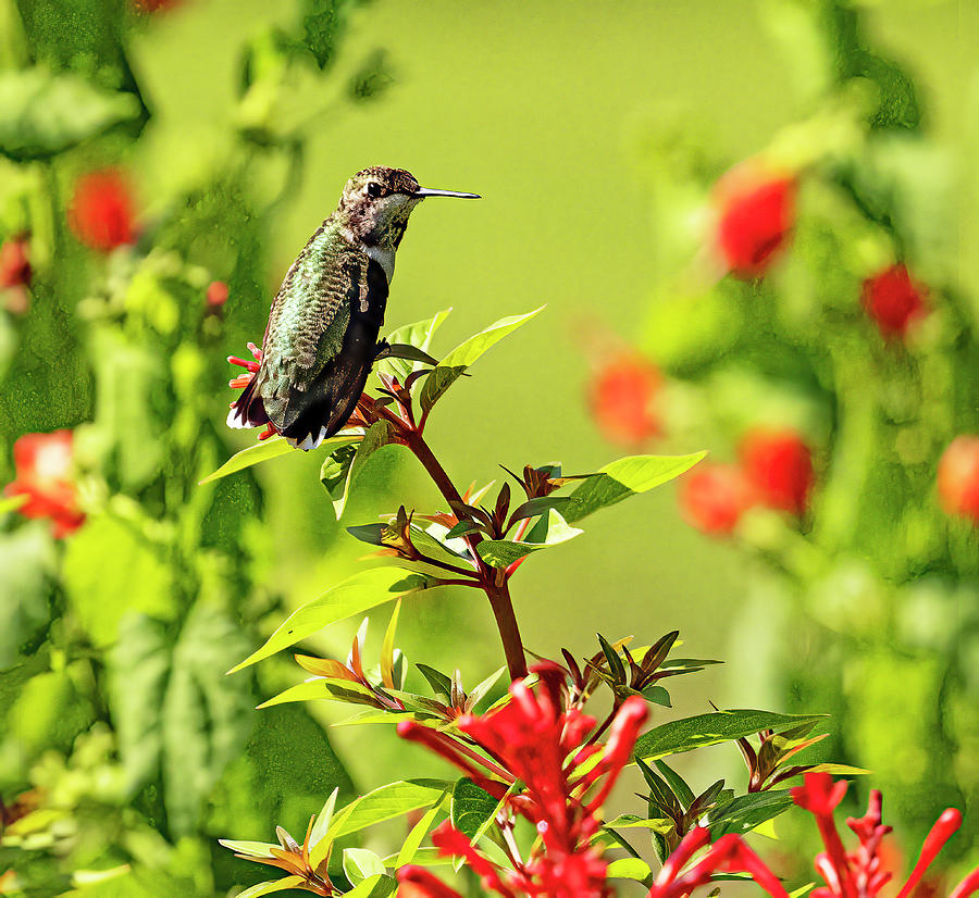 Guardian Of The Blooms Photograph