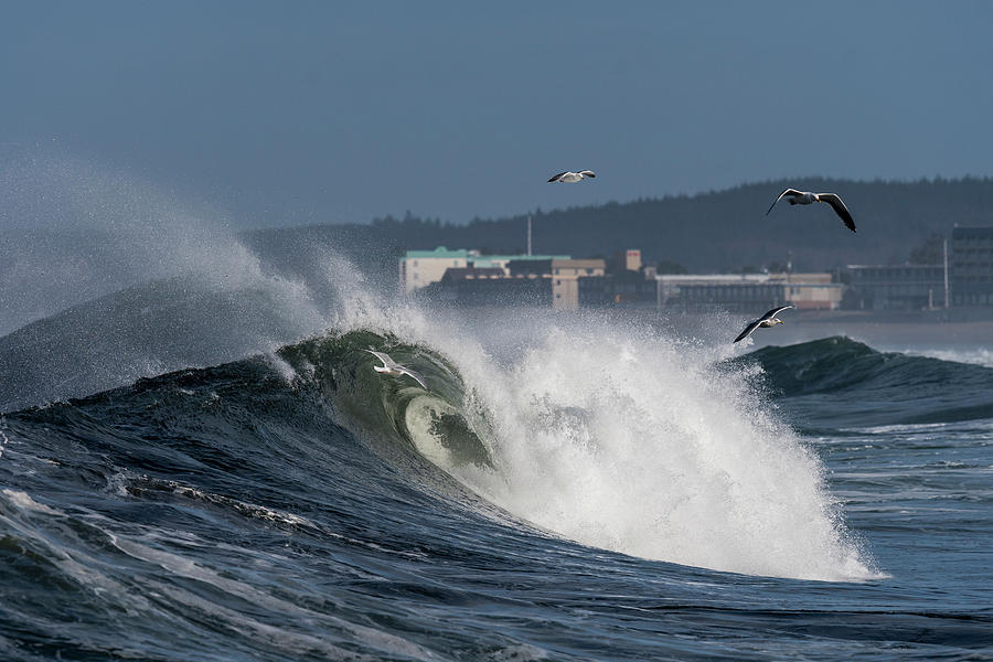 Gulls and Waves by Robert Potts