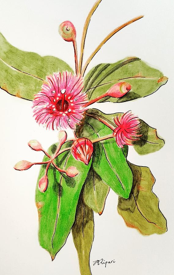Gum Drawing - Gum Blossom by Michelle Ripari