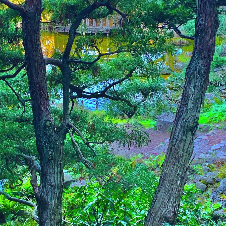 Hakone Garden Pine Photograph