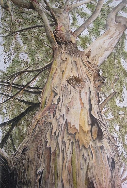Gum Tree Drawing - Halls Gap Sentry by Michelle Ripari