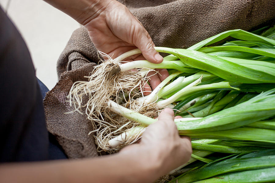 Hands with organic spring onions Photograph by Heshphoto