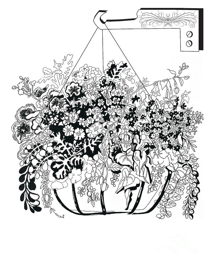 Hanging Basket Drawing