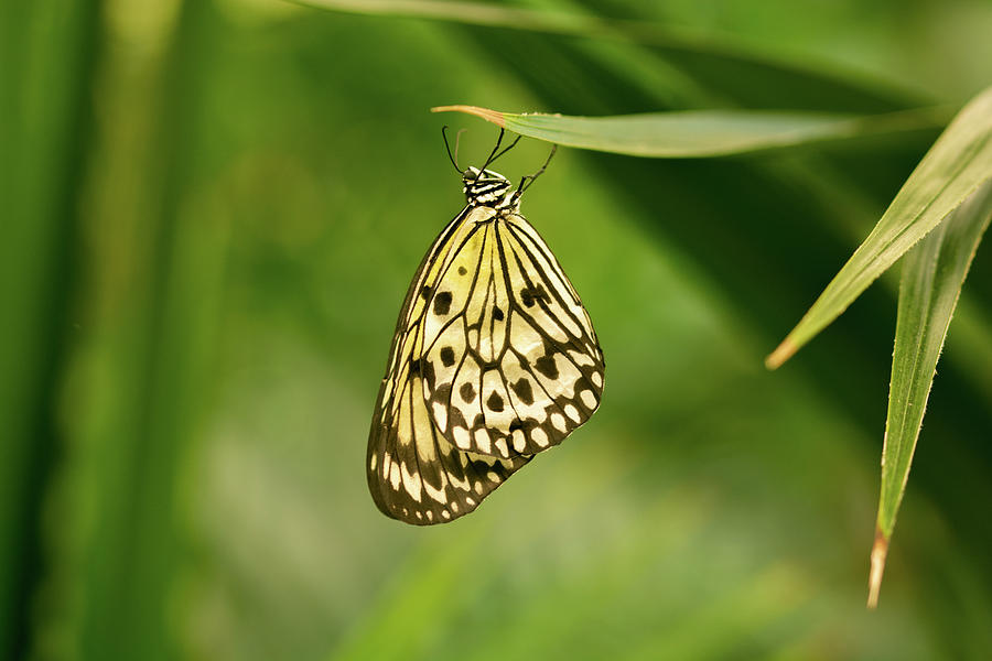Hanging Paper Kite Butterfly Photograph