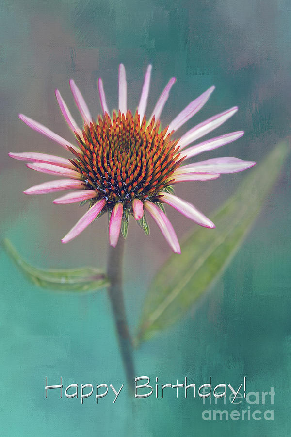 Happy Birthday Painted Pink Coneflower by Sharon McConnell